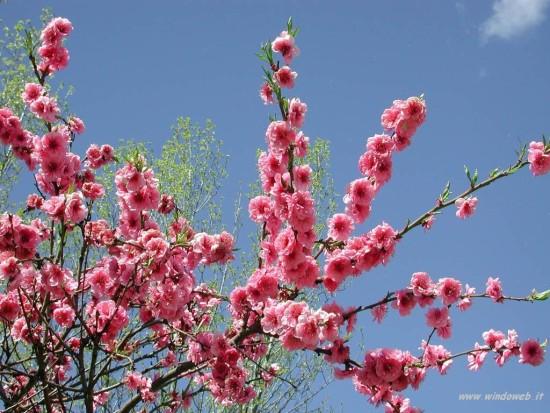 sfondi desktop primavera prati - photo #37